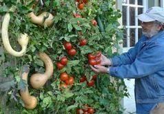 94. Gemüsegarten direkt in Ihrem Haus mit Paletten Pflanzer