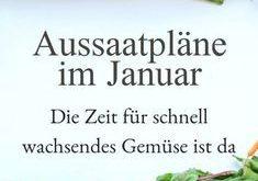 Aussaatpläne im Januar - Das neue Gartenjahr beginnt