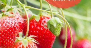 Die 5 süßesten Erdbeersorten