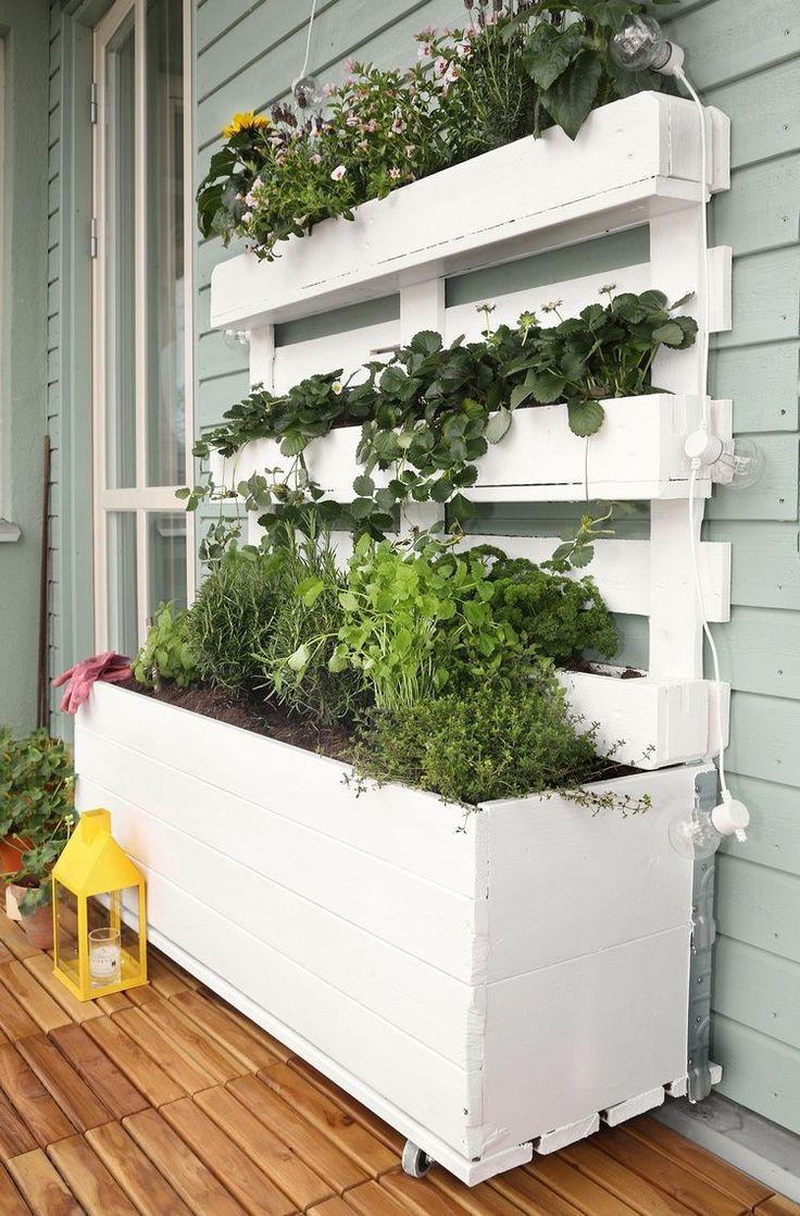 erdbeeren auf dem balkon pflanzen wissenswertes zu standort und pflege pallet ideas